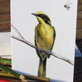 Helmeted Honeyeater greeting card, yellow bird, bee, wildlife drawing