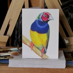 Gouldian Finch greeting card Australian bird colourful, wildlife art
