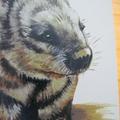 Hairy-Nosed Wombat greeting card Australian wildlife art animal portrait