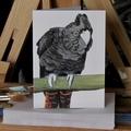 Red Tail Black Cockatoo greeting card Australian wildlife art, large bird parrot