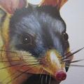Bilby greeting card Australian wildlife art, cute animal desert