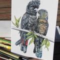 Red Tail Black Cockatoo pair - wildlife art greeting card - parrot like bird