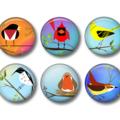 Magnets - Funky Birds - set of 6 fridge magnets