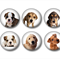 Magnets - Dogs 1 - set of 6 fridge magnets