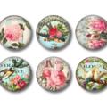 Magnets - Garden Paradise - set of 6 fridge magnets