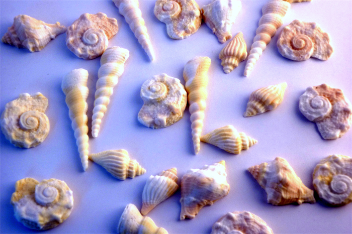 30 small edible sea shells cake cupcake decorations for Miniature tree decorated with sea shells