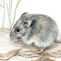 New Holland Mouse greeting card, cute animal with yellow flowers, wildlife art
