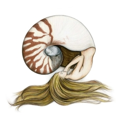 Nautilus Shell Mermaid Art Print Colour Pencil Drawing Tattoo 8x10