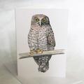 Powerful Owl greeting card, Australian wildlife art, big bird