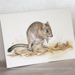 Woylie greeting card, Brush-tailed Bettong, Australian wildlife art