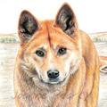 Dingo greeting card Australian wildlife art, native dog, apex animal