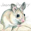 Dusky Hopping Mouse greeting card Australian wildlife art
