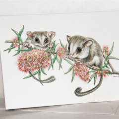 Feathertail Glider greeting card Australian wildlife art, little cute animal