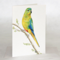 Orange Bellied Parrot greeting card, colourful bird with beetle, Australian