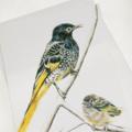 Regent Honeyeater greeting card, wildlife art, bird black yellow feathers baby