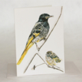 Regent Honeyeater greeting card, wildlife art, bird black yellow feathers baby