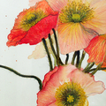 "Poppies, original watercolour painting, 9"" x 9"" (23cm sq), on Fabriano paper"