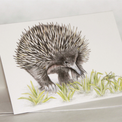 Echidna greeting card. Australian wildlife art cute unique animal