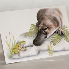 Platypus & Frog greeting card Australian Wildlife Conservation series animal art