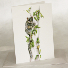 Leadbeater's Possum greeting card, on a tree with a butterfly, fairy possum