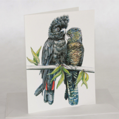 Red Tail Black Cockatoo pair - wildlife art greeting card - parrot like bird
