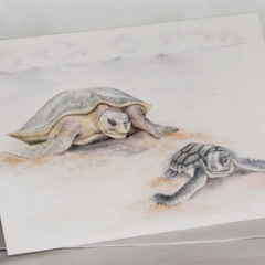 Flatback Turtles greeting card Australian wildlife art, mother and baby, beach