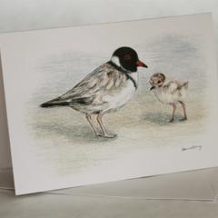 Hooded Plover greeting card Australian wildlife art, beach-nesting bird