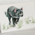 Tasmanian Devil greeting card Australian wildlife art, unique animal