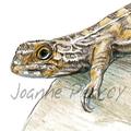 Grassland Earless Dragon greeting card Australian wildlife art, reptile, lizard