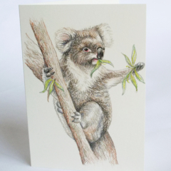 Koala greeting card Australian wildlife art