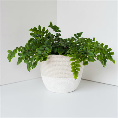Rope Plant Cosy / White Dip / Handmade, Homewares, Storage, Pot, Vessel, Basket