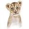 Baby Lion giclee print - zoo series