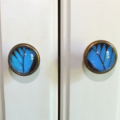 Statement Real Ulysses Butterfly Wing drawer knobs, set of 2 - Blue Black