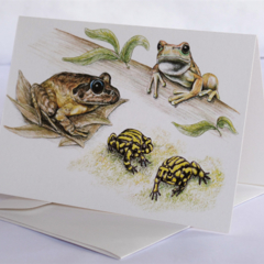 Endangered Frogs -  Australian wildlife art greeting card