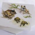 Endangered Frogs -  Australian wildlife art greeting card