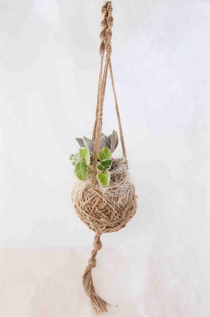 Kokedama Moss Ball With Macrame Plant Hanger Nuno