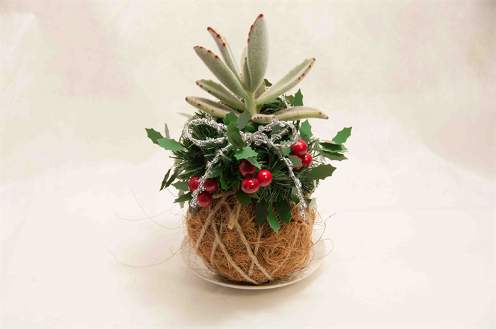 Fruits that help you go to the bathroom - This Is Our Christmas Version Coco Dama Coconut Fiber Covered Moss