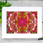 Kaleidoscope 'Fuchsia'