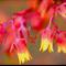 A Digitally Photograph of Cacti in My Garden