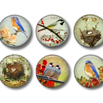 Fridge magnet set - Birds 