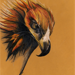 Hand Drawn Coloured Pencil Art Print on Fabric (Australian Wedge-tailed Eagle 2)