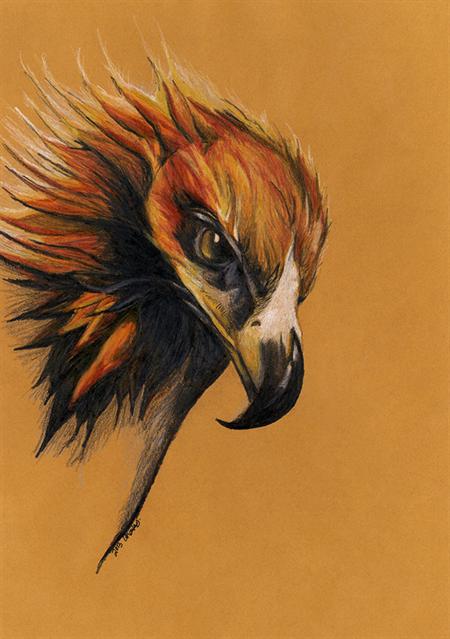 Hand Drawn Coloured Pencil Art Print on Fabric (Australian Wedge-tailed Eagle 2)