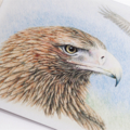 Wedge-tailed Eagle greeting card Australian wildlife art