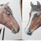 Pet Portrait in Colour A3, custom drawing from your photo of animal or bird.