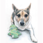 Pet Portrait in Colour A4, custom drawing from your photo of animal or bird.