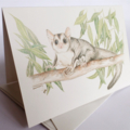 Mahogany Glider greeting card Australian wildlife art, cute possum-like animal