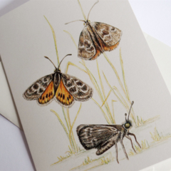 Golden Sun Moth greeting card Australian wildlife art, butterfly, insect