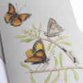 Eltham Copper Butterfly greeting card Australian wildlife art, endangered insect