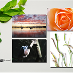 "Set of four 6x4"" Photography Greeting Cards