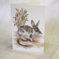 Bilby greeting card portrait Australian wildlife cute animal desert